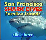 Dive the Farallones with Incredible Adventures
