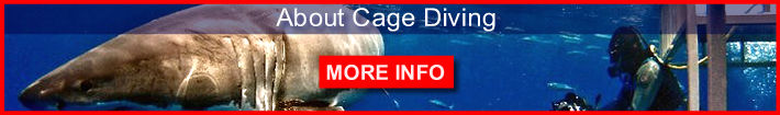 About cage diving. Informaiton about cage diving with sharks.