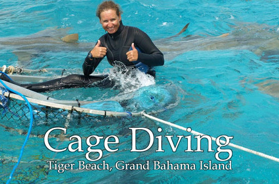 Shark cage diving at Tiger Beach, Grand Bahama Island. Dive Team member Joanne Fraser.