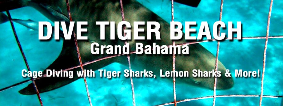 Shark Cage Diving on Tiger Beach Grand Bahama Island