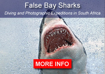 False Bay S harks South Africa