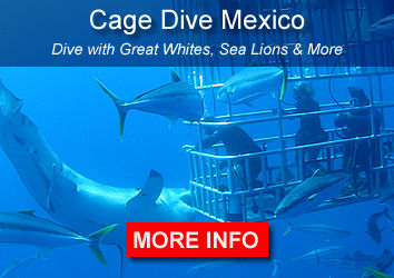 Sharks Isla Guadalupe Mexico