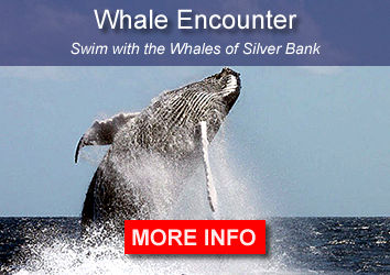 Swim with the whales of Silver Bank