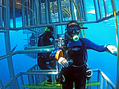 Sheri Lewis, Director of Sales at Incredible Adventures. Shark diving off Isla Guadalupe, Mexico